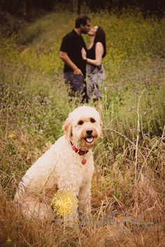Goldendoodle engagement session