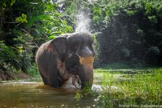 ethical elephant sanctuary in Phuket island.Best ethical elephant sanctuary in Phuket island. Thailand Vacation, Thailand Honeymoon, Phuket Thailand, Thailand Travel, Lofoten, Dubrovnik, Places To Travel, Places To See, Laos