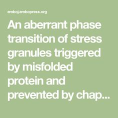 An aberrant phase transition of stress granules triggered by misfolded protein and prevented by chaperone function | The EMBO Journal