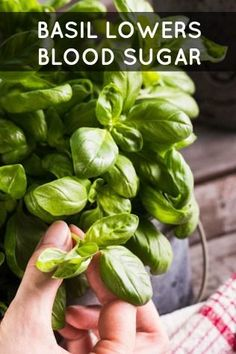 Basil lowers blood sugar | 17 Herbs and Spices That Fight Diabetes