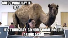 Its Thursday Hump Day Camel quotes quote days of the week thursday hump day camel thursday quotes happy thursday happy thursday quotes
