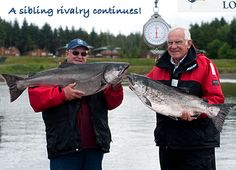 A sibling rivalry continues! Two large Chinook salmon, Haida Gwaii, British Columbia. http://www.peregrinelodge.com/blog.php?p=199