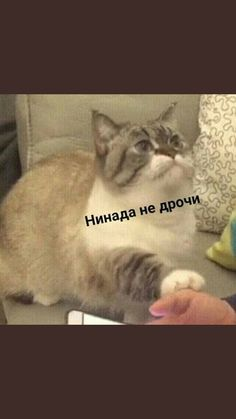На случай важных переговоров Cute Cat Memes, Funny Animal Memes, Hello Memes, Funny Note, Happy Memes, Russian Memes, Bad Cats, Quality Memes, Meme Faces
