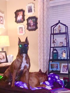 Boxer Love, Dogs, Animals, Animales, Animaux, Pet Dogs, Doggies, Animal, Animais