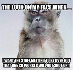 Funny work memes coworkers faces 50 New ideas Work Memes, Work Quotes, Work Funnies, Work Sayings, Haha Funny, Hilarious, Funny Memes, Jokes, Funny Stuff