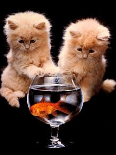 Don't you just have that feeling sometimes that there is something fishie... Two Against One