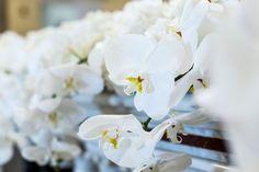 Orchidee bianche  e ortensie  Ideeventi Foto - Andrea Sgambelluri