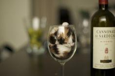 I'm in ur glass drinkin ur wine