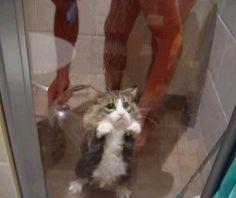 Suesse katze unter dusche