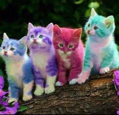 Risultato immagine per rainbow kittens Baby Animals Super Cute, Cute Baby Cats, Cute Little Animals, Cute Funny Animals, Kittens Cutest, Cutest Animals, Baby Animals Pictures, Cute Animal Drawings, Cute Animal Pictures