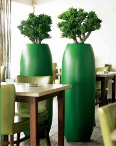 Eco Office Plants - eco-friendly plant displays and landscaping for London and the South East