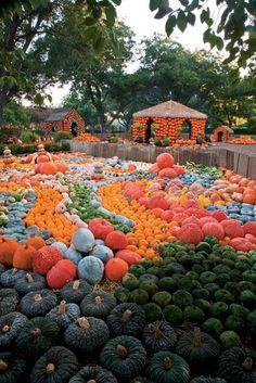 Dallas flower mart you can almost see the refdallas - Botanic gardens pumpkin festival ...