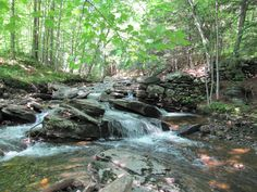 beautiful stream in the woods