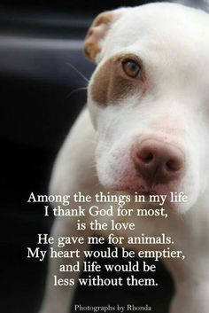Thank God for my love of animals. Compassion towards ALL of God's creatures is a sign of a closer relationship with Him and a true strength of character. ALL sentient beings belong to Him. How you treat His children (other species) is a direct reflection of how you honor God. Remember, He is testing you.