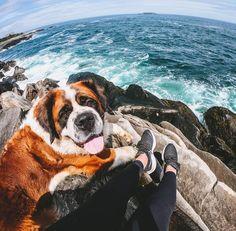 St Bernards, Ocean Scenes, Nova Scotia, Dog Breeds, Grand Canyon, Saints, Around The Worlds, Canada, Dogs