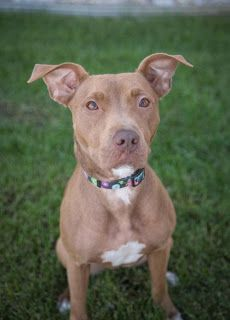 Bully Love & Devotion : USA, Urgent Home Needed