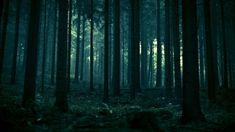 Dark-Forest-19.jpg (1920×1080)