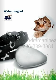 www.energetix.tv/sandmar  www.facebook.com/bidenmagnets