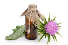 Maarjaohakas on tõhusaim ravimtaim maksale ja tervele organismile! - Alkeemia