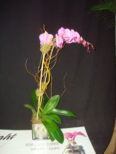 Purple Phalaenopsis Orchid.   To view our entire selection please visit us at www.starflor.com  #flowers #events #eventdecor