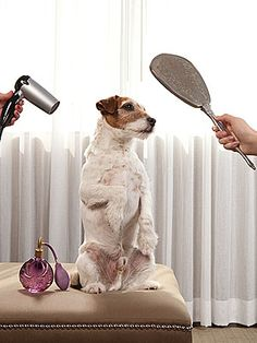 Uggie preps for the Oscars. Photo by Gregg Segal in People magazine.