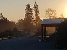 Spectacular Sunsets at the deer shed, Bangor Farm, Darfield, Christchurch Bangor, Oak Tree, Sunsets, Deer, Wedding Venues, Barn, Outdoor, Wedding Reception Venues, Outdoors