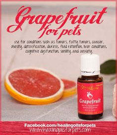 Young Living Essential Grapefruit Oil for our pets. www.youngliving.com/debbieshari