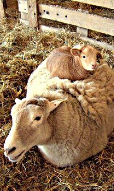 ♥ Counting Sheep ♥