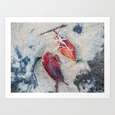 https://society6.com/product/coralline-algae-and-dead-leaf-on-sand_print?curator=hereswendy