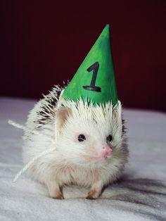 Happy birthday | Hedgehog