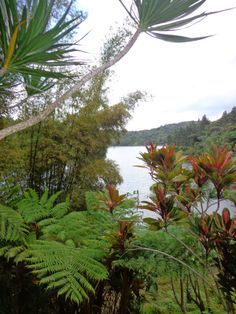 Puerto Rico lo tiene todo: Lago Carite