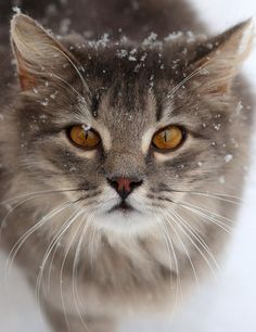 Beautiful winter scene with cat in snow