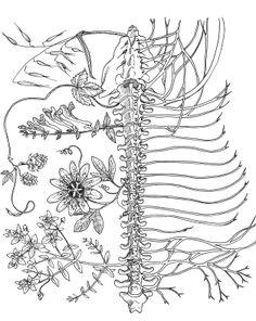 Nervous system affinities - milky oats, skullcap, hops, passionflower, St. John's wort // HerbPharm Art