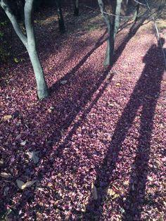 낙엽  이것은 몰살이다 망나니의 칼춤에 가녀린 모가지가 싹둑싹둑 잘려서 시체로 이루어진 대지가 되어버렸다  이것은 몰살이다 대자연의 잔인한 망나니 같은 칼춤에 온 생명 벌벌 떠는 몰살의 계절이다  겨울, 이래서 춥구나 #낙엽