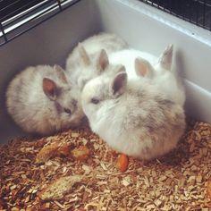Beautiful baby bunnies!  I love them!