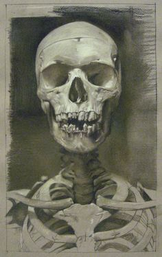 Gallery Henoch - David Kassan    Anatomy Study in Sepia, charcoal and pastel on toned paper, 15x9""