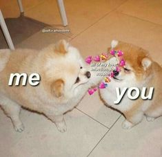 The post appeared first on Wholesome Memes. Cute Cat Memes, Cute Love Memes, Dog Memes, Funny Memes, Animal Memes, Funny Animals, Cute Animals, Memes Amor, Memes Lindos