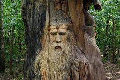 Odin?  No matter...it's a cool tree!
