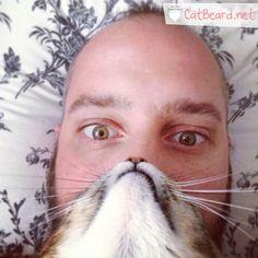 The Pusstache!   Cat Beard