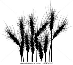 Google Image Result for http://image.shutterstock.com/display_pic_with_logo/96701/96701,1319691762,18/stock-vector-illustration-with-wheat-silhouettes-isolated-on-white-background-87484792.jpg