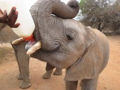 The DSWT is a front-line organisation working every day in the field to protect African's wildlife and habitats. We are not traditionally a campaigning organisation, but the severity of the danger caused by the escalating ivory trade will only be countered if we all stand up for elephants together.