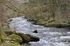 sur les bords du Scorff en forêt de Pont-calleck