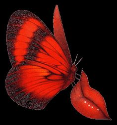 animated gif butterflies images glitter 70.gif -  album gallery,animated gif butterflies images glitter,gif blog,images friends,facebook sha...