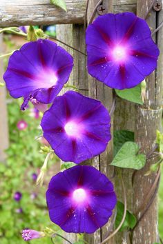 morning glories Black hole or planet center with black hole have galaxies falling in for the lines
