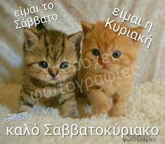 Good Morning, Thankful, Cats, Happy, Laughing, Animals, Weddings, Punto De Cruz, Buen Dia