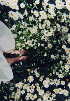 Barefoot in the foothills Wild flowers meadow soft grunge   vintage wonderland.