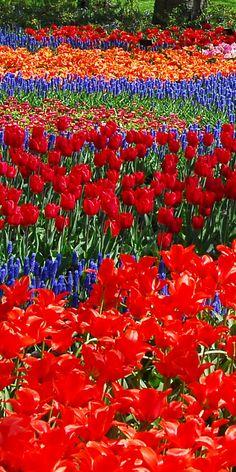 オランダ キューケンホフ公園(Keukenhof the Netherlands) Rose Rise, World Of Color, Garden Paths, Trees To Plant, Tulips, Photo Art, Flower Arrangements, Cactus, Succulents