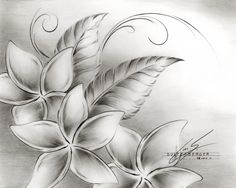 Plumeria flower a leaves sketch