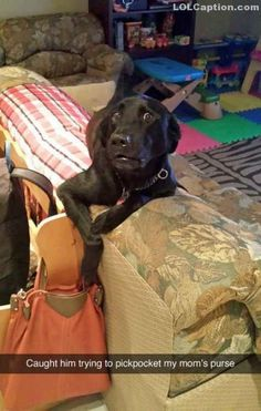 Dog caught stealing - http://www.lolcaption.com/extremely-funny-pictures-of-animals/dog-caught-stealing/