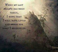 "My Pack of Wolves on Twitter: ""https://t.co/KebKRM1xip"""